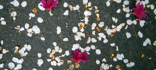 zen-simplicity_flowers